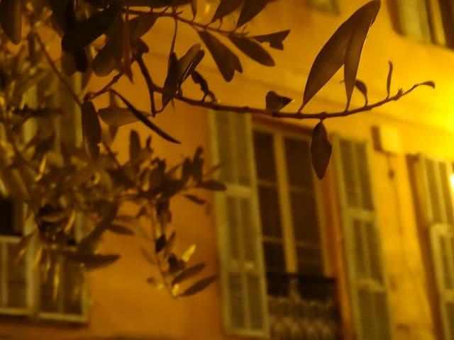 gult hus med blader foran Nice