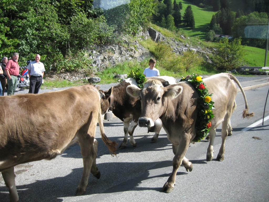 Cows in Liechtenstein