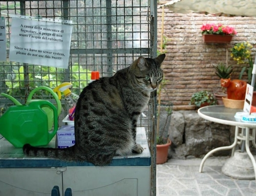 Torre Argentina: Cats among Roman ruins