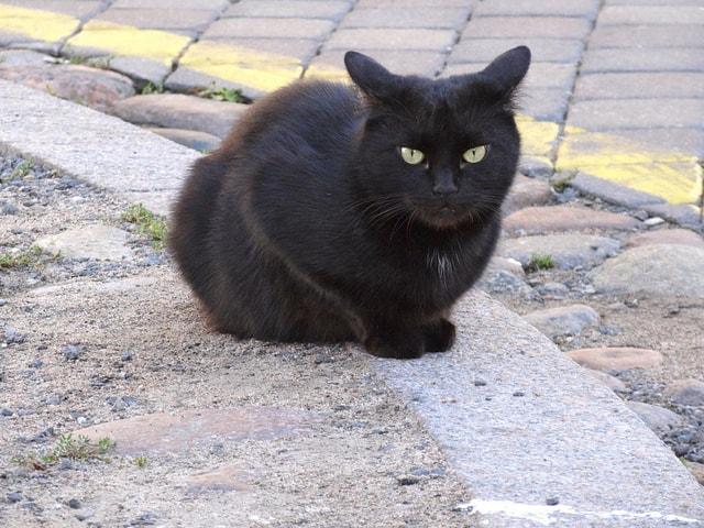 Uzupis cat