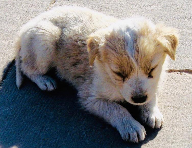 Aswan, Egypt, puppy in the sun