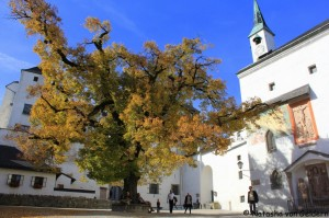 Hohensalzburg-lime-tree-courtyard-001-1024x682