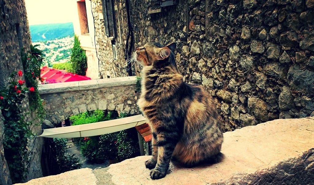 St Paul-de-Vence, cat