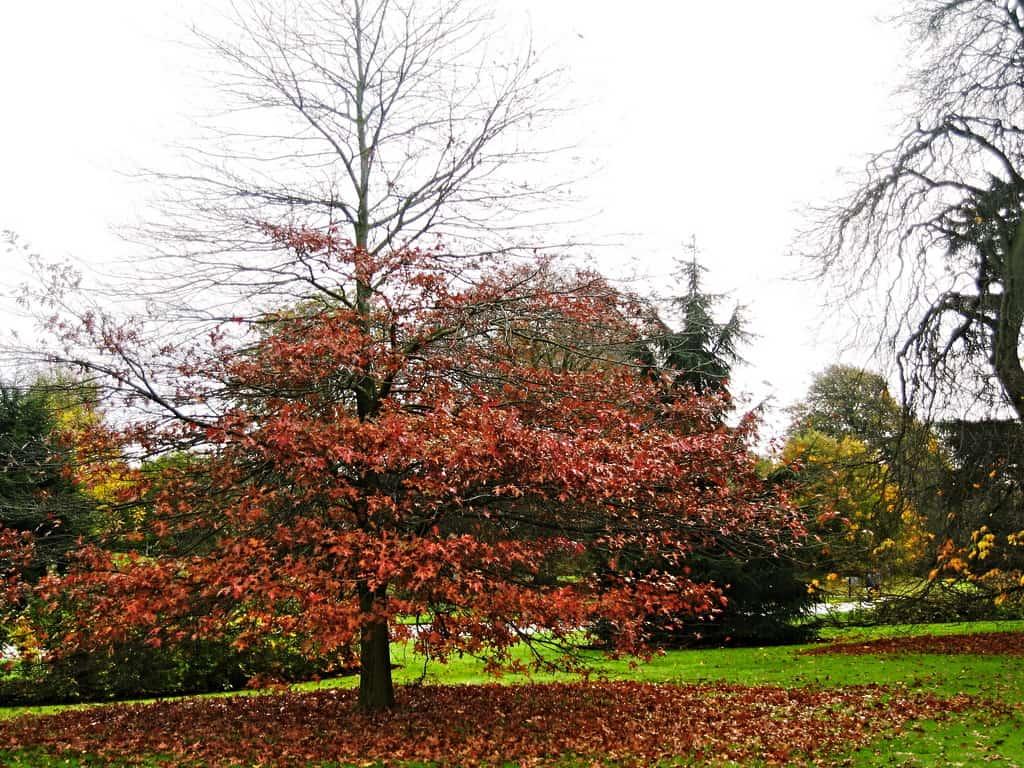 Autumn leaves Kew Gardens, London | Sophie\'s World Travel Inspiration