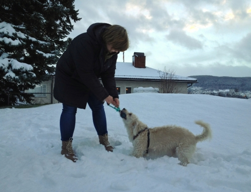 Review: Jack Wolfskin cruelty free winter coat