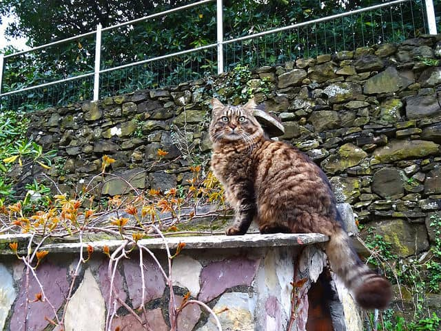 The winery cat of Cinque Terre