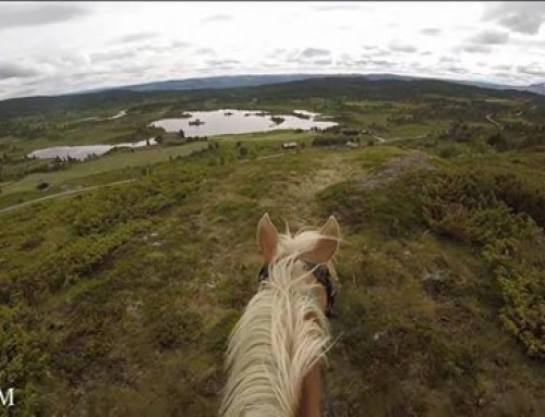 Norway on horseback