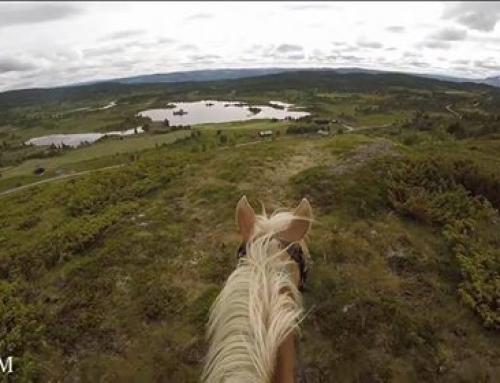 Norway on horseback