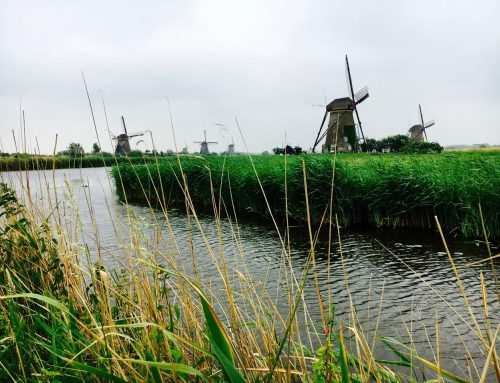 Kinderdijk, the cat and the cradle