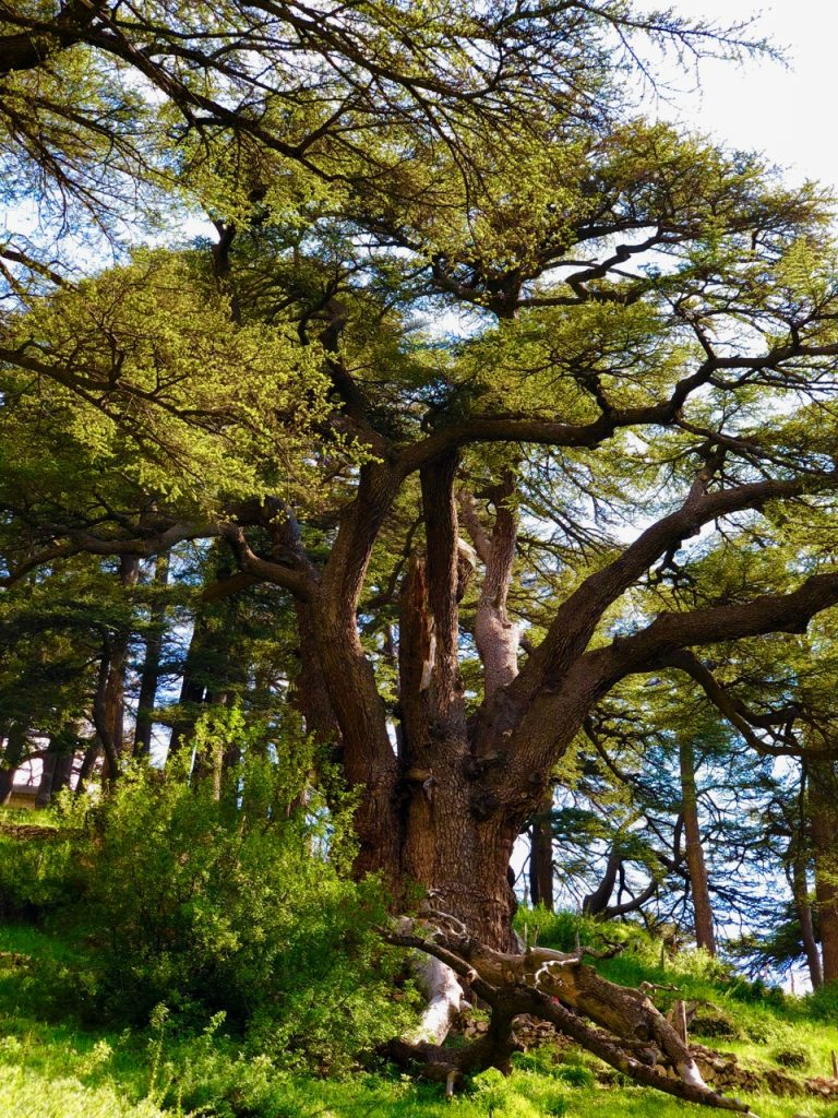 Qadisha Valley and the Cedars of God
