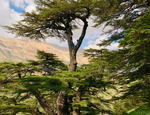 Hiking Qadisha Valley and the Cedars of God